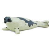 Safari Harp Seal
