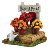 Harvest Fields Mums