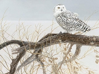 Fallen willow Snowy Owl 500 Piece puzzle