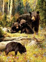 Bears 500 piece puzzle