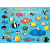 Tropical Fish 1000 Pieces