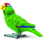Safari Green Cheeked Parrot