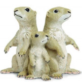 Safari Prairie Dogs