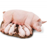 Safari Sow with Piglets