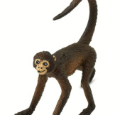 Safari Spider Monkey