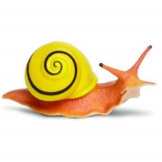 Safari White Lipped Snail