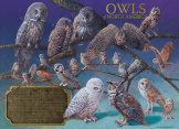 Owls of North America 1000 Pieces