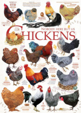 Chicken Quotes 1000 Pieces
