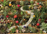 Succulent Garden 1000 Pieces