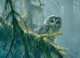 Mossy Branches - Spotted Owl 500 piece puzzle