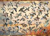 Ducks of North America 1000 piece puzzle