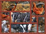 Farmyard Friends 275 piece puzzle