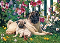 Pug Family 1000 piece puzzle