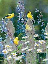 Goldfinch Quartet 500 piece puzzle