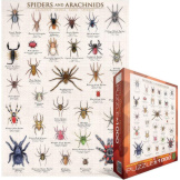 Spiders & Arachnids 1000 Pieces