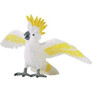 Safari Cockatoo