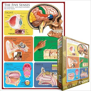 The Five Senses 1000 Pieces